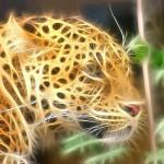 [n❁h]美しい獣たちをさらに美しく。写真加工アプリ『Tangled FX』がめちゃめちゃヤバイ‼︎